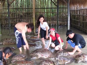 Penangkaran Penyu di Tanjung Benoa