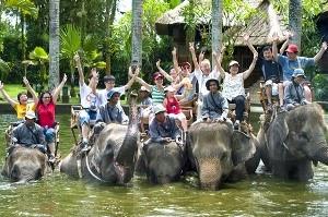 1424715206_Taro-Elephant-Safari-Park.jpg