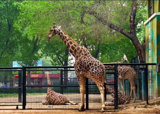 Sinka Zoo - Wisata Singkawang