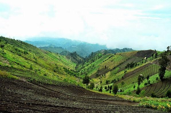 panorama keindahan wisata puncak b29