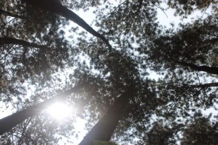 Taman Hutan Raya Ir. Juanda.