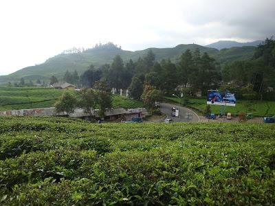 Kebun Teh Puncak Pass Bogor Jawa Barat Indonesia