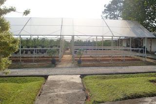repair damaged plants