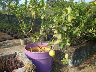 mekarsari garden indonesia