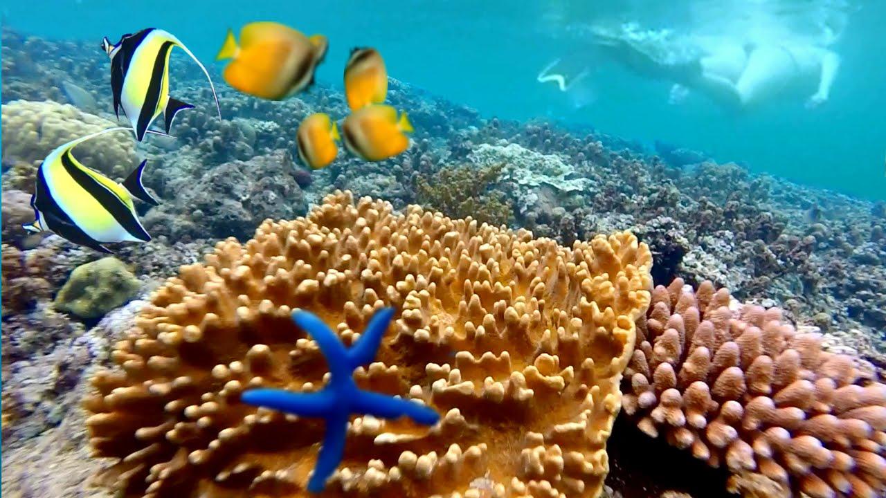 Tempat Snorkeling Terbaik