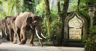 Bali elephant park taro